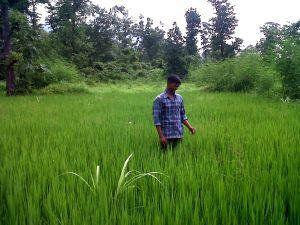 laxman rice